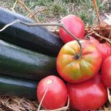 courgette / tomates
